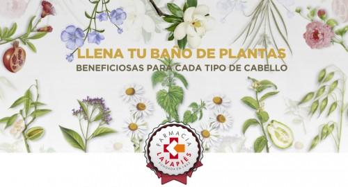 Plantas con beneficios para cada tipo de pelo. Promoción especial en Farmacia Lavapies de champús Klorane